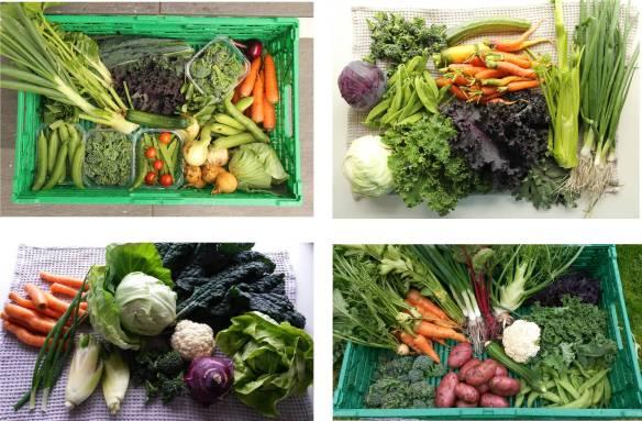 Grønnsaksinnhøsting